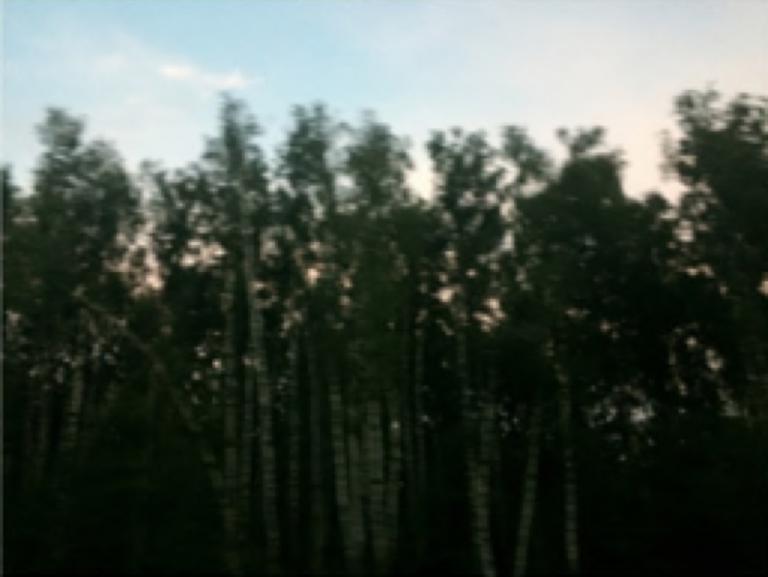 Leonard Grigoryan: Russian birch (b)