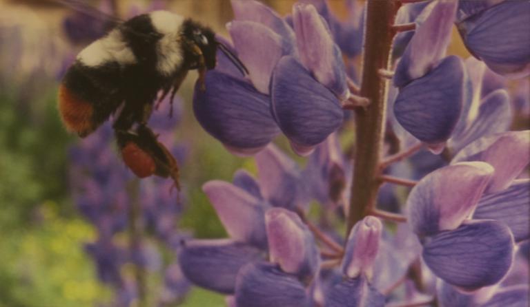 Chris Brangwin Purple Nectar