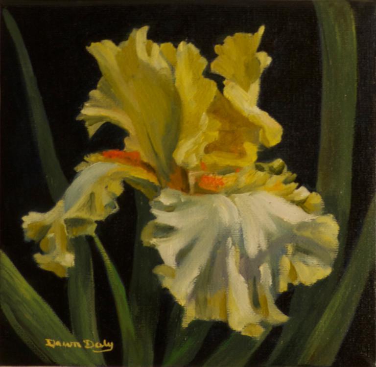 Dawn Daly: Iris