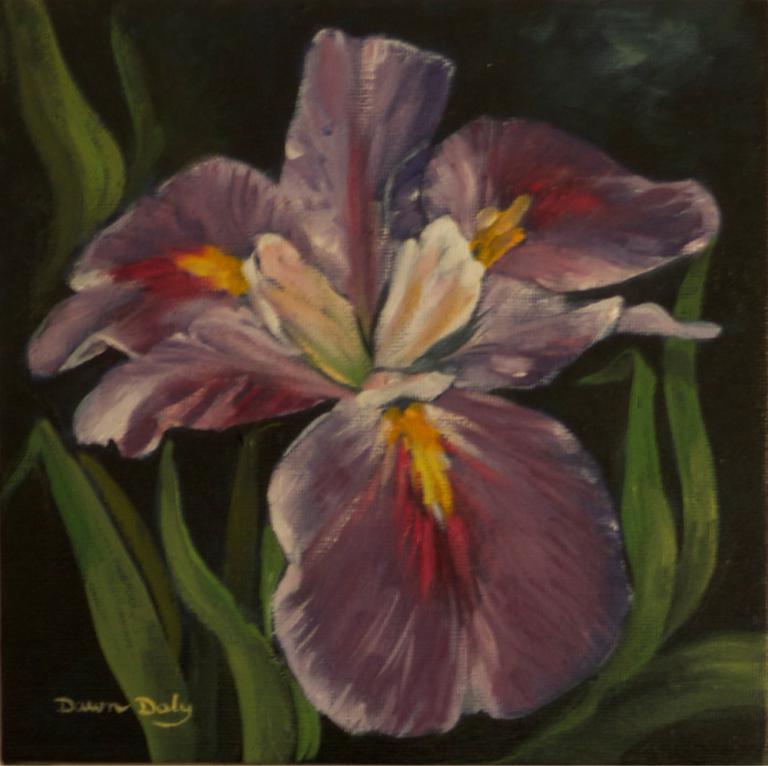 Dawn Daly: Bearded Iris