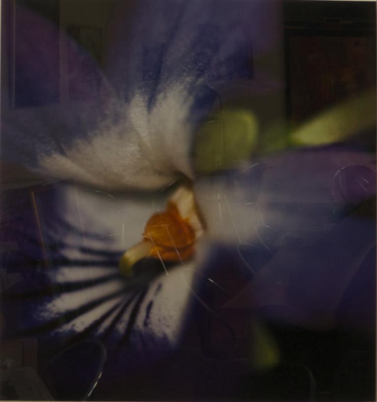 Matthew Hill: Viola