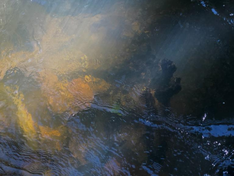 Belinda Webster: Nugent's Creek
