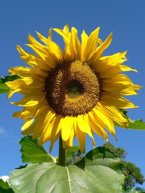 Tony Barnett: Sunshine