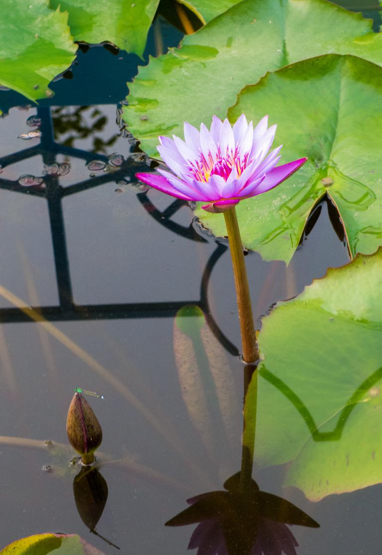 Sue Williamson: The Waterlily and the Dragonfly