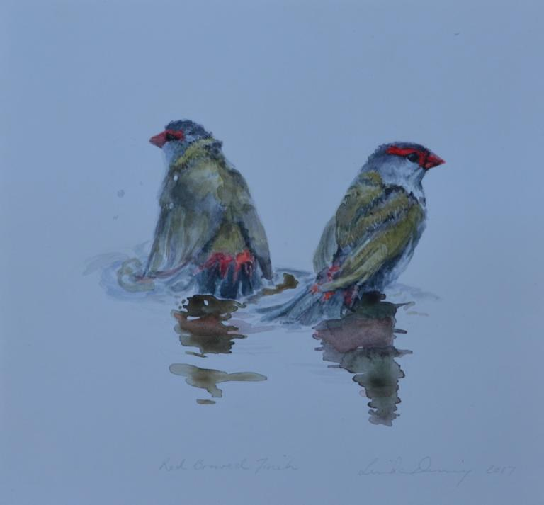 Red-browed Firetails at Water II