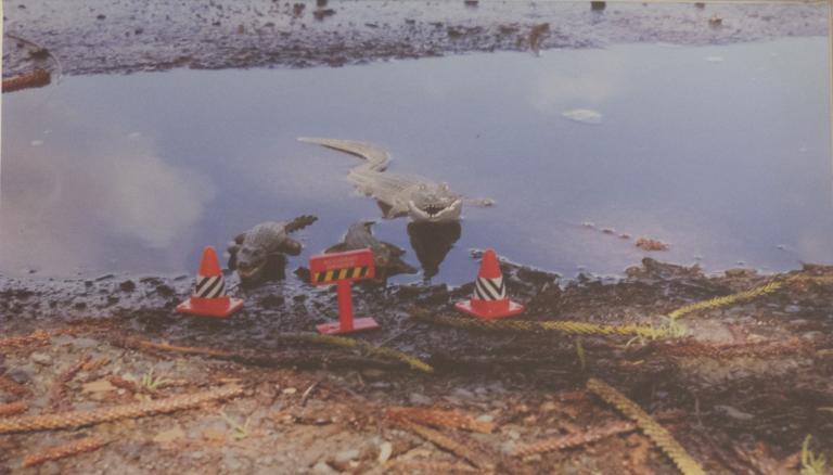 Kaye Johnston: Crocodiles Pose a Threat, Crooked River, Gerroa