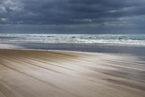 Sue Williamson: Ocean Majesty