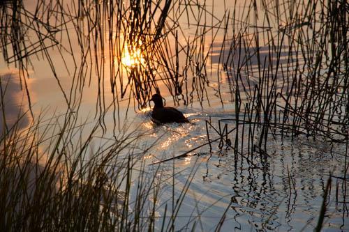 Sue Williamson: Evening Calm