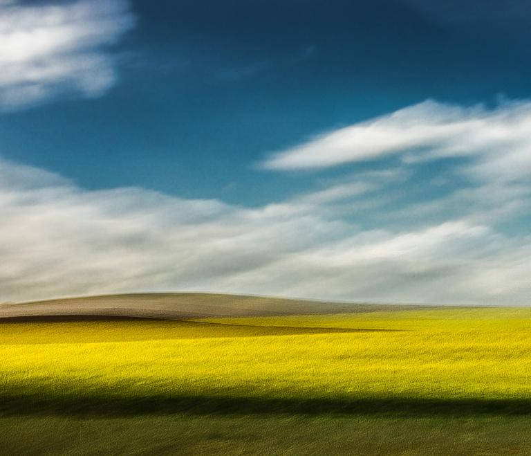 Touched by the Sun - Canola Fields, Switzerland