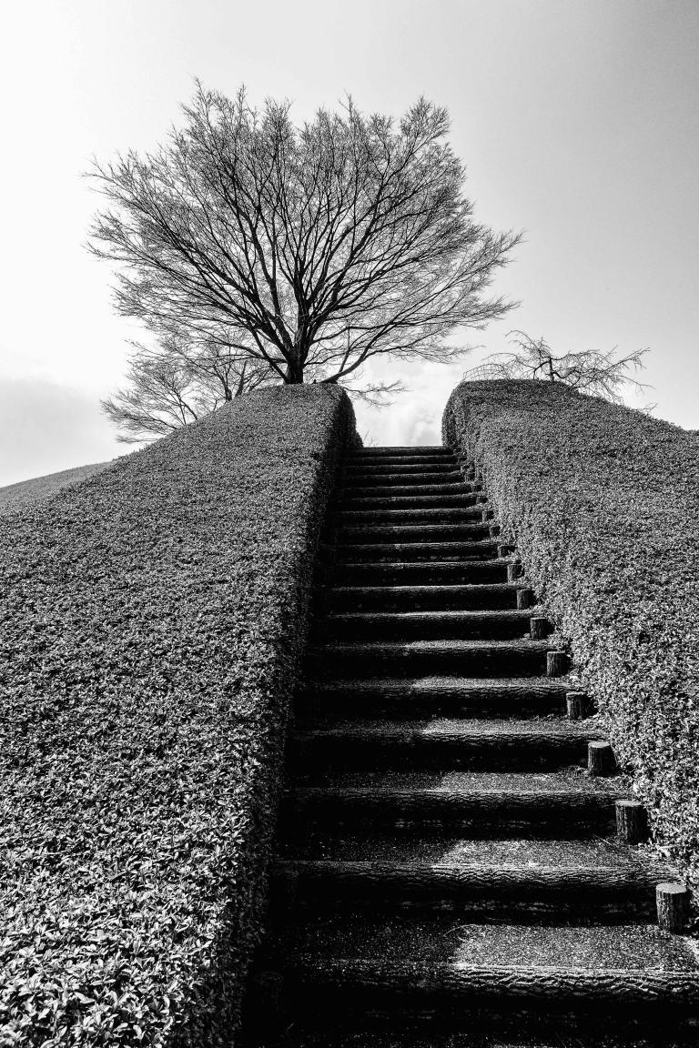 Sue Williamson: Tree in Winter