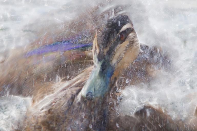 Colin Talbot: Frantic Bathtime