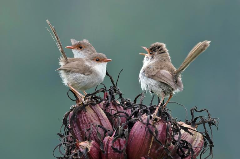 Colin Talbot: Morning Call of the Wrens