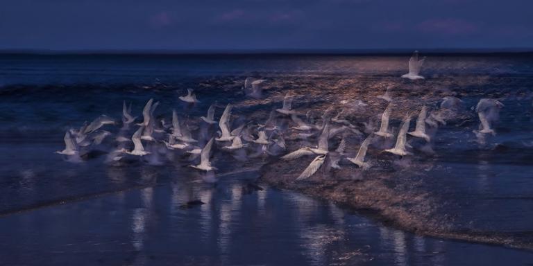 Colin Talbot: Night Flight of the Terns
