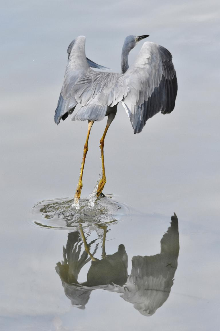 Colin Talbot: The Heron Takes Flight
