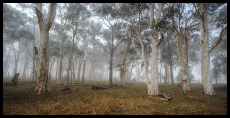 Colin Talbot: Woodland Dawn