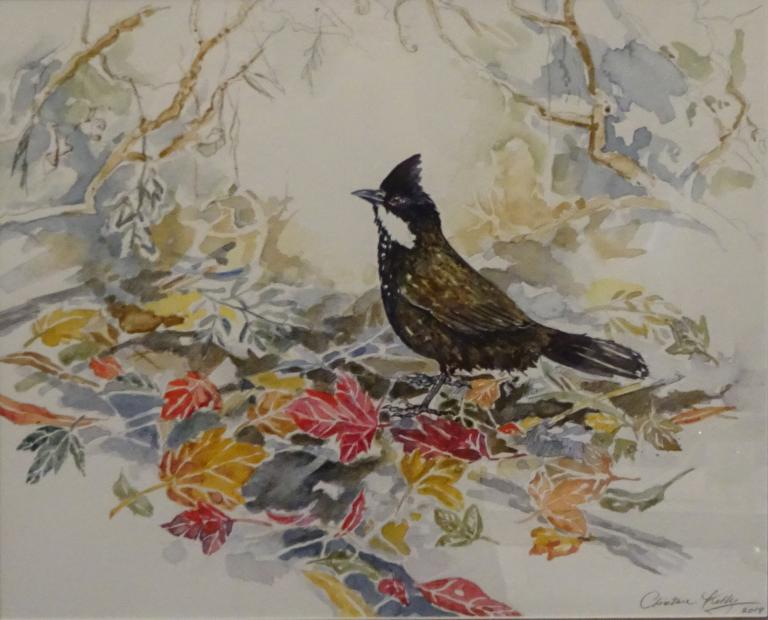 Christine Kelly: Easter Whipbird. Autumn Leaves