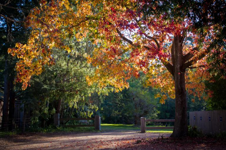 Sue Williamson: Secret Corner in Kangaroo Valley