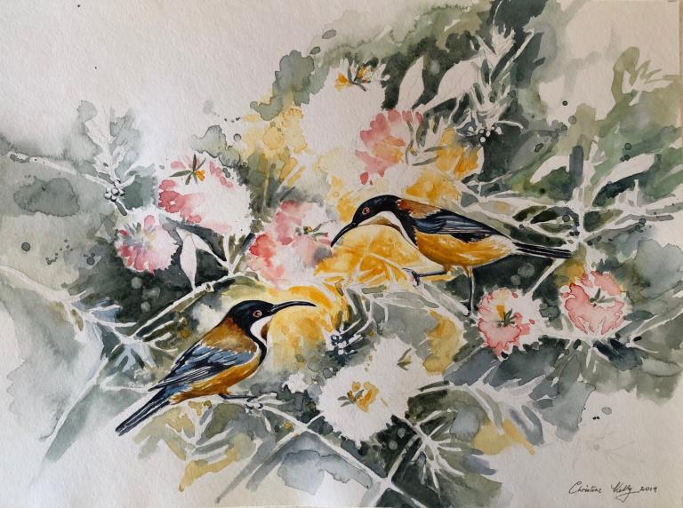 Christine Ann Kelly: Eastern Spinebills