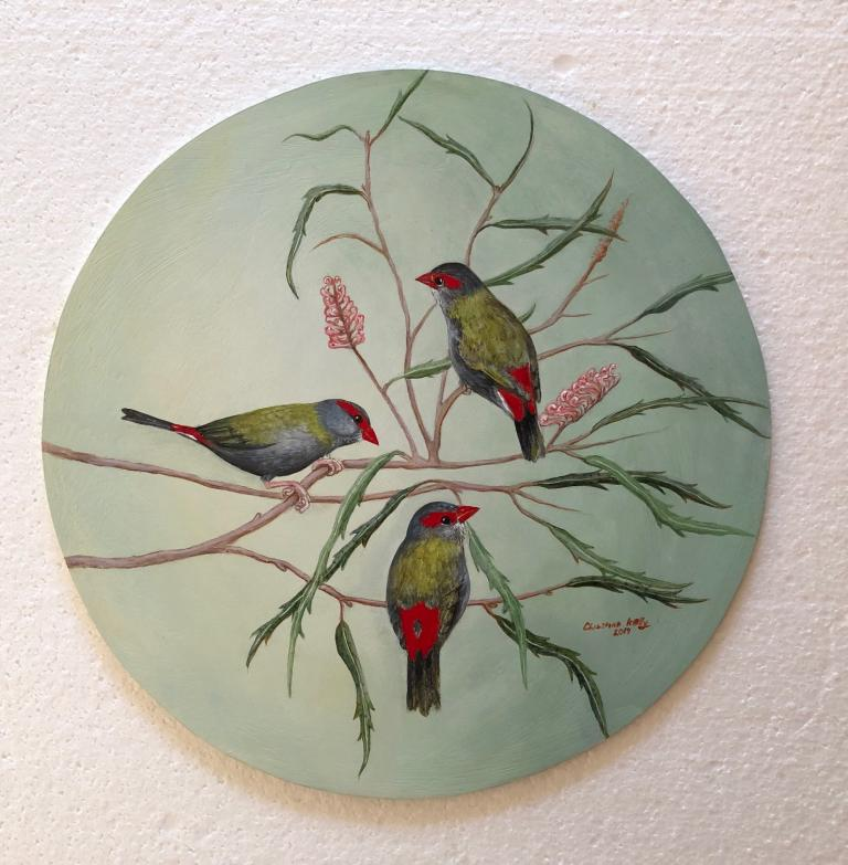 Christine Ann Kelly: Red-browed Finches