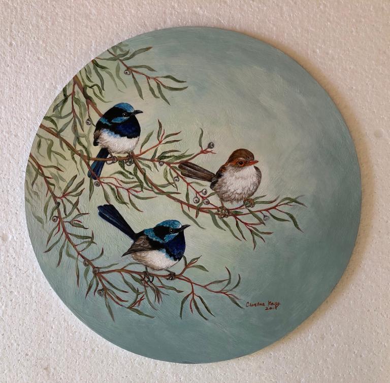 Christine Ann Kelly: Superb Fairy-wrens