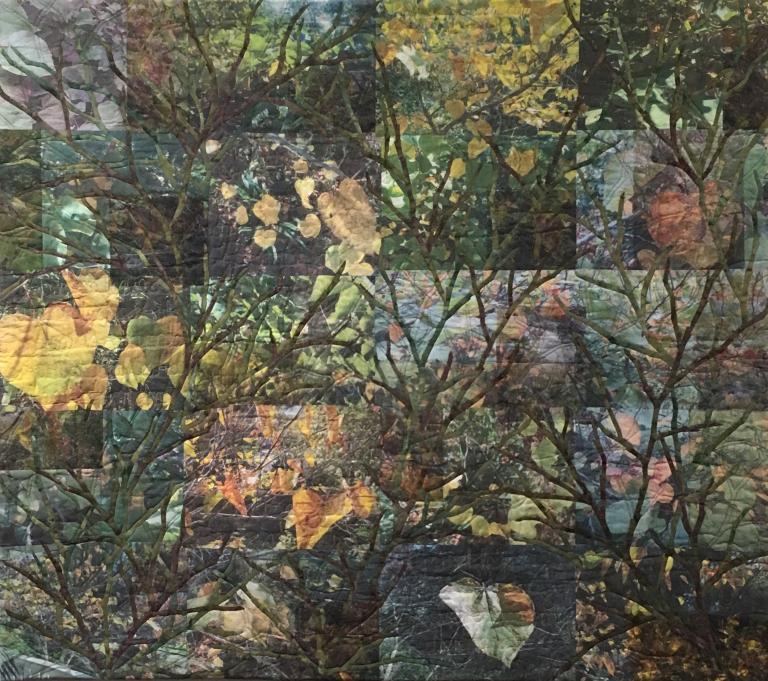 Carolyn Collins: Transit of Autumn
