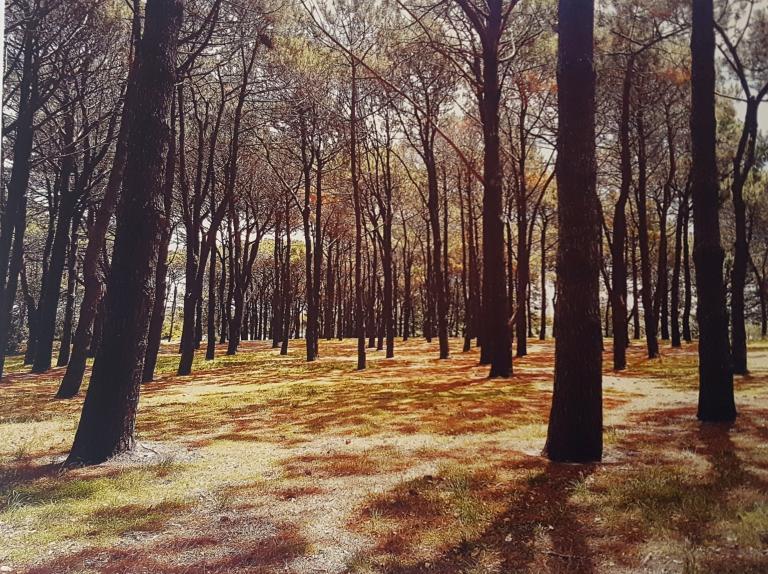 Eloise Lamond: Pine Forest