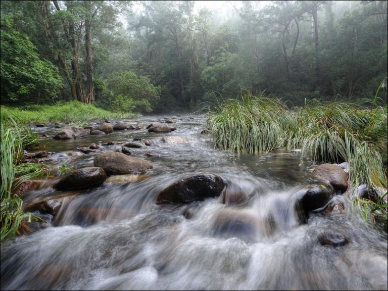 Colin Talbot: Forest and Flow on the Upper River