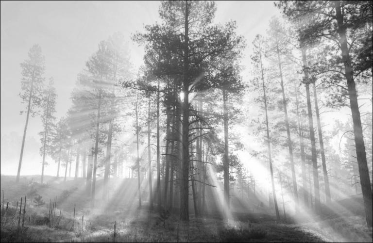 Colin Talbot: Kaibab Sunrays