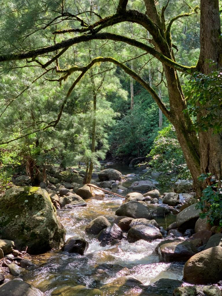 Sue Williamson: Nugent's Creek Glistening from Rain