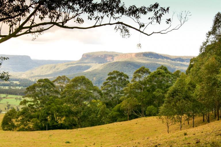Sue Williamson: Kangaroo Valley